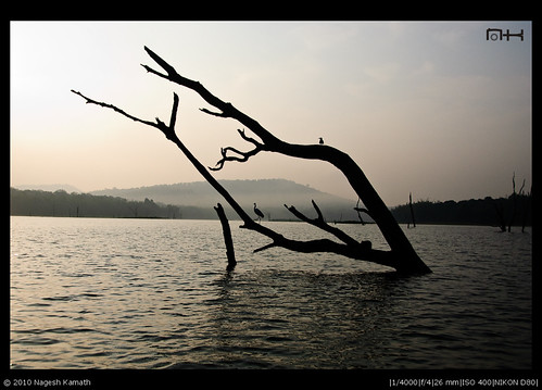Early morning mist | Kabini