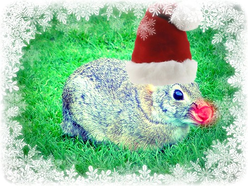 The Christmas Bunny.An Interview With The Christmas Bunny Whatever