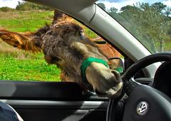 OK, let me drive...