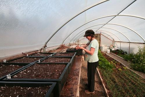 Sarah, seeding
