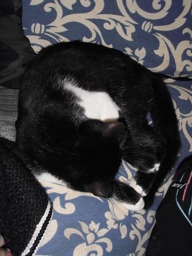 Morgana che dorme