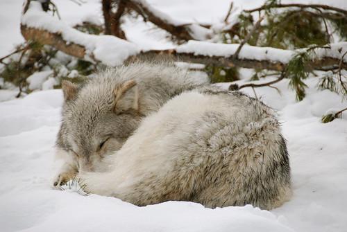 A freezing slumber