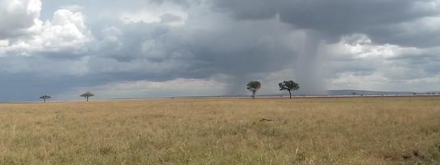 Serengeti - Tanzanie 2011 (105)