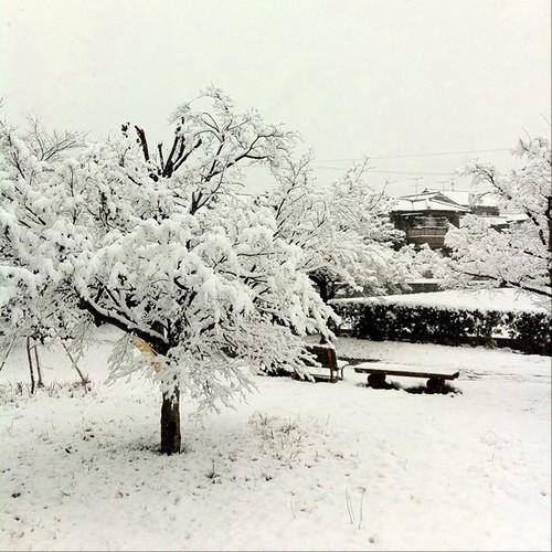 昨日撮った写真だけど、癒されて! 今日もお疲れ様でした。では、また明日!(^O^☆♪ #snow #Nara