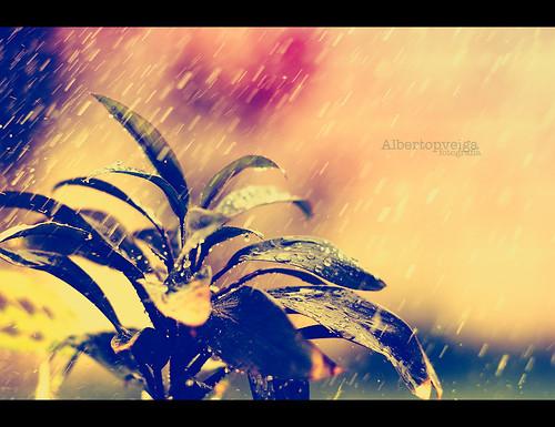 (93/365) Vuelve a llover by albertopveiga