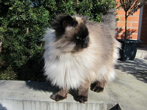 Seawall Cat
