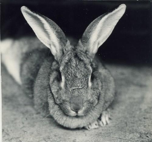 1980 Walter Hopps rabbit