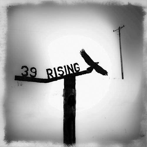 39 rising