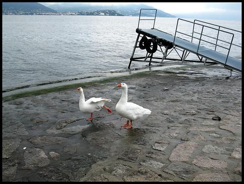 Il lago dei cigni by [Piccola_iena]