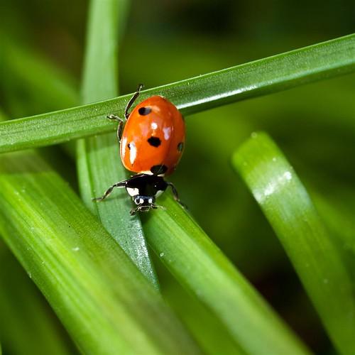 09 - ladybugs