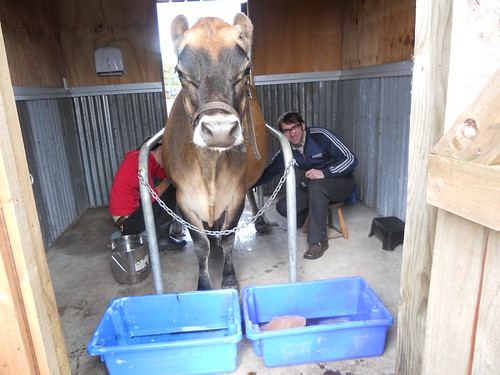 Me Milking Olga