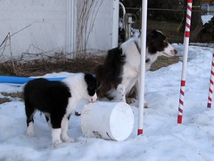 1694 Snow and Gromit and bucket