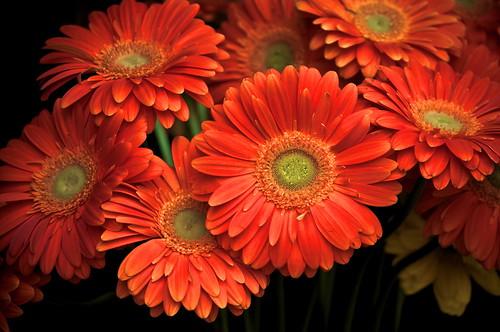 Orange Flower Bouquet in the Shadows