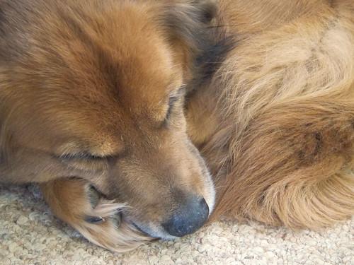 Letting my sleeping dog lie