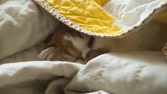 Gilbert Sleeping