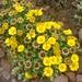 Cabo de Gata: La Primera Semana