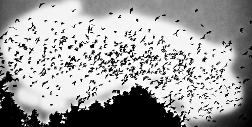 Bats-03-PhotoAdv-Bats-2011-6-17