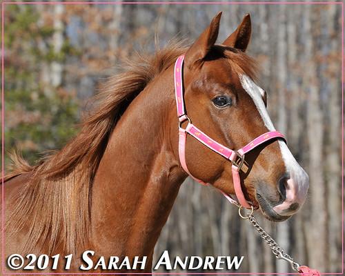 Mimi, a Camelot Auction graduate