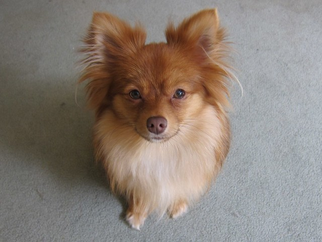 Beautiful Pup