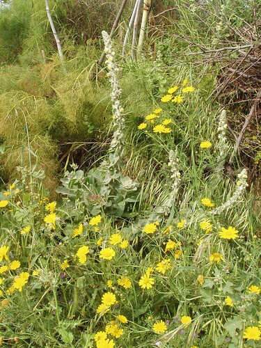201105010133_wild-flowers