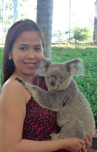 Brisbane koala moment