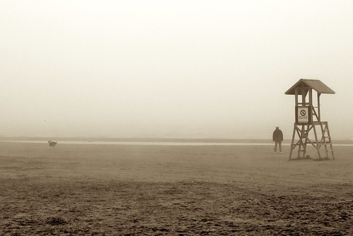 Beach, Dog and Fog