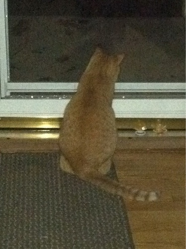 Obi waiting for power to come back on.