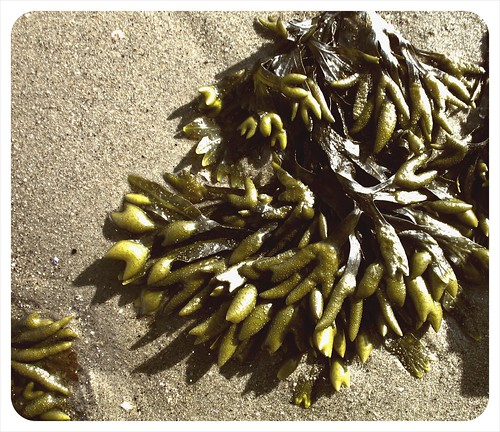 seaweed, Grove Beach
