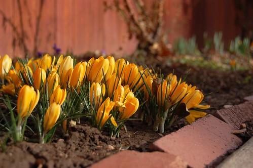 Hello Spring?!?