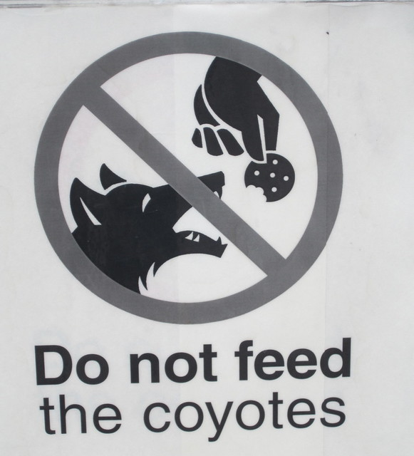 Do not feed the coyotes