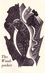 Woodpecker by Aisselle