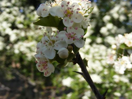 April May 2011 010