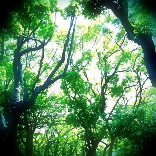 長雨だね、森林浴で癒されて…。#forest