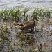 A ducky