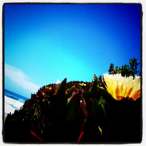 flower_water
