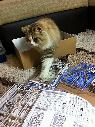 Building MC RX-93-2 Hi Nu Gundoom Gundam (4)