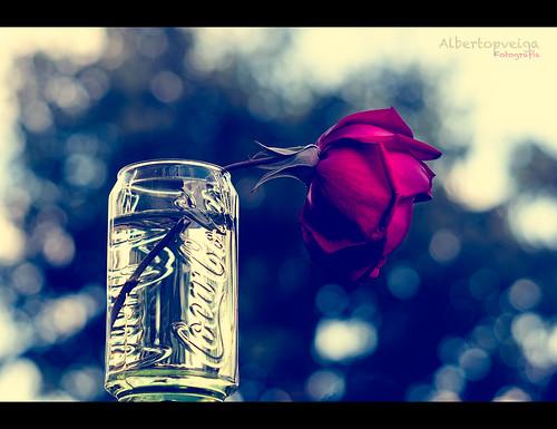 (115/365) Rosa-Cola by albertopveiga