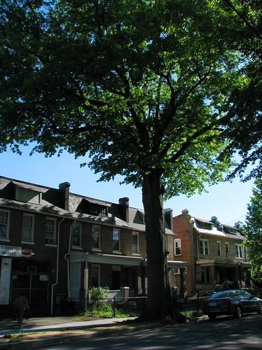 1205 Shepher Street Tree