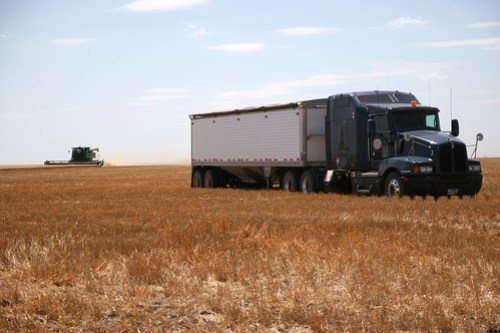 A parked truck waits to get dumped on as a combine cuts wheat in the background