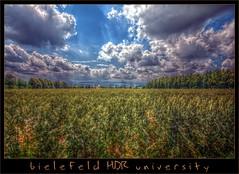 Bielefeld HDR University