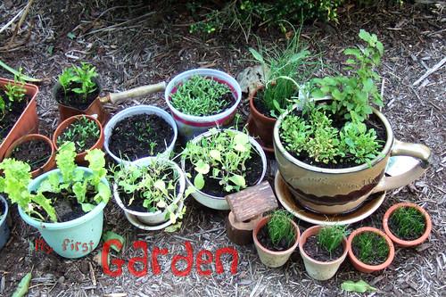 Garden: Week 4