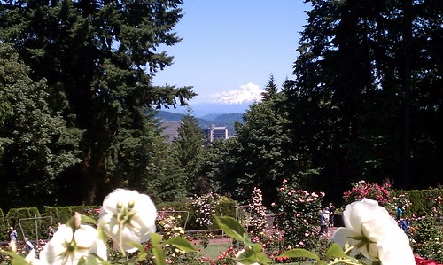 July 1, 2011: Mt. Hood from the Rose Garden