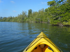 Paddling in the Mangroves
