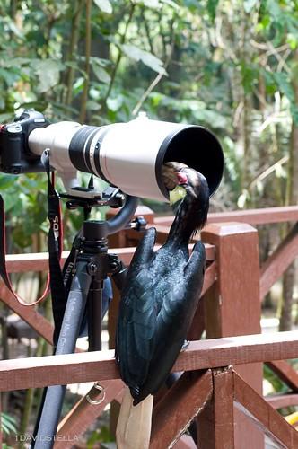 Lens inspector.