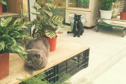 兩個八卦的貓