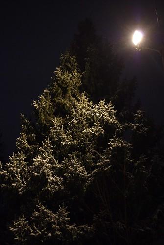 Tree, Snow, and Streetlamp