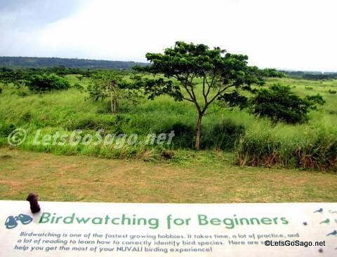 Gazebo for Bird Watching