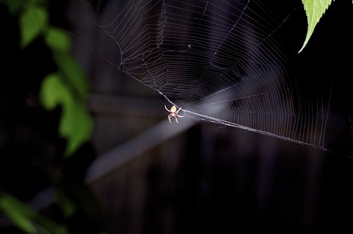 In a Web