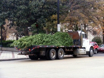 The new tree arrives. acnatta/Flickr