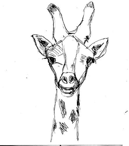 Giraffe - ballpoint pen sketch